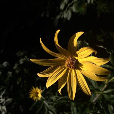 anotheraster